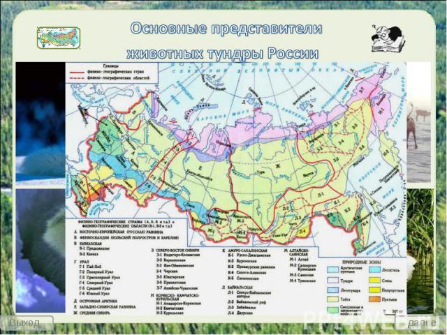 Основные представители животных тундры России
