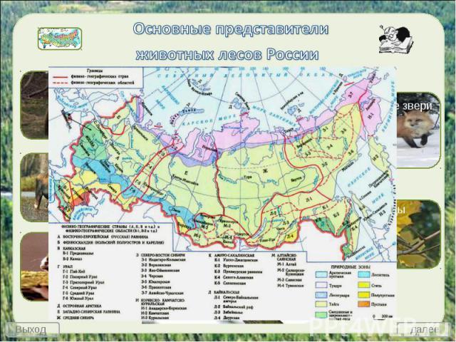 Основные представители животных лесов России