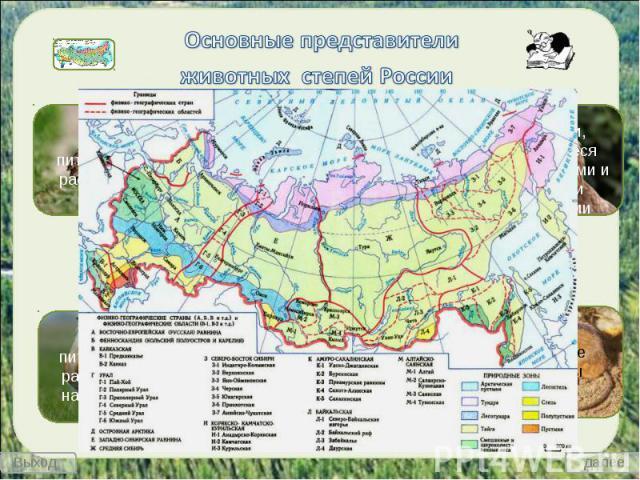 Основные представители животных степей России