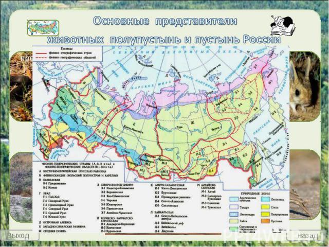 Основные представители животных полупустынь и пустынь России