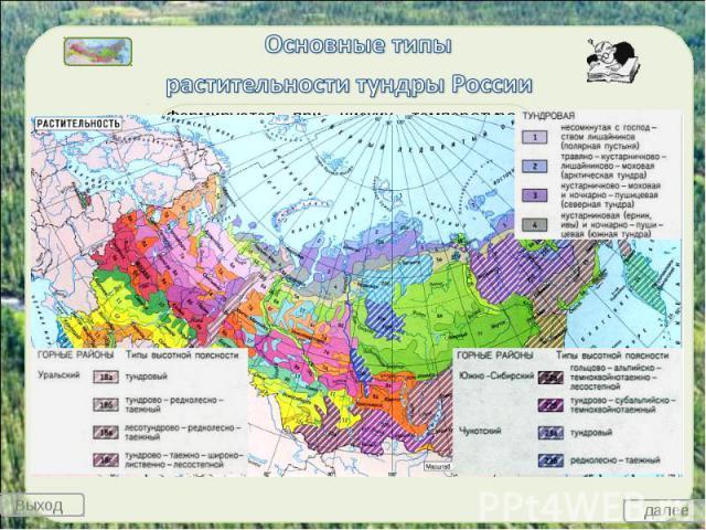 Основные типы растительности тундры России
