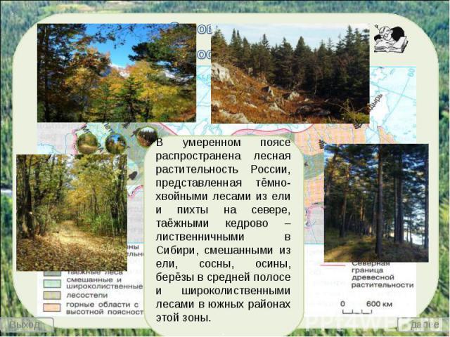 В умеренном поясе распространена лесная растительность России, представленная тёмно-хвойными лесами из ели и пихты на севере, таёжными кедрово – лиственничными в Сибири, смешанными из ели, сосны, осины, берёзы в средней полосе и широколиственными ле…
