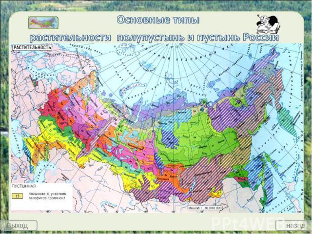 Основные типы растительности полупустынь и пустынь России