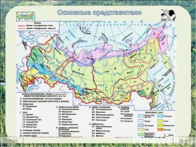 Основные представители животных арктических пустынь России