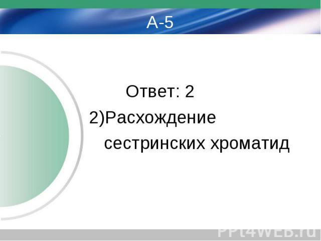 А-5 Ответ: 2 2)Расхождение сестринских хроматид