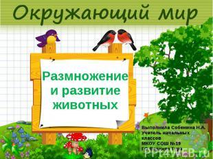 Размножение и развитие животных Выполнила Собенина Н.А. Учитель начальных классо