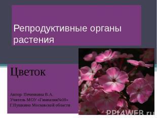 Репродуктивные органы растения Цветок Автор: Печенкина В.А. Учитель МОУ «Гимнази