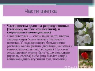 Части цветка Части цветка делят на репродуктивные (тычинки, пестик или пестики),