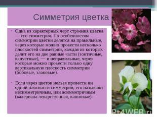 Симметрия цветка Одна из характерных черт строения цветка — его симметрия. По ос