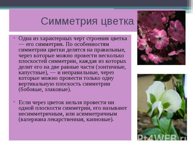 Симметрия цветка Одна из характерных черт строения цветка — его симметрия. По особенностям симметрии цветки делятся на правильные, через которые можно провести несколько плоскостей симметрии, каждая из которых делит его на две равные части (зонтичны…