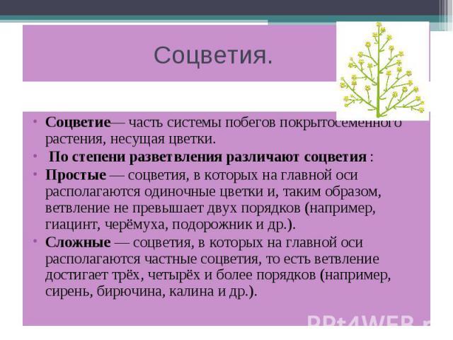 Соцветия. Соцветие— часть системы побегов покрытосеменного растения, несущая цветки. По степени разветвления различают соцветия : Простые — соцветия, в которых на главной оси располагаются одиночные цветки и, таким образом, ветвление не превышает дв…