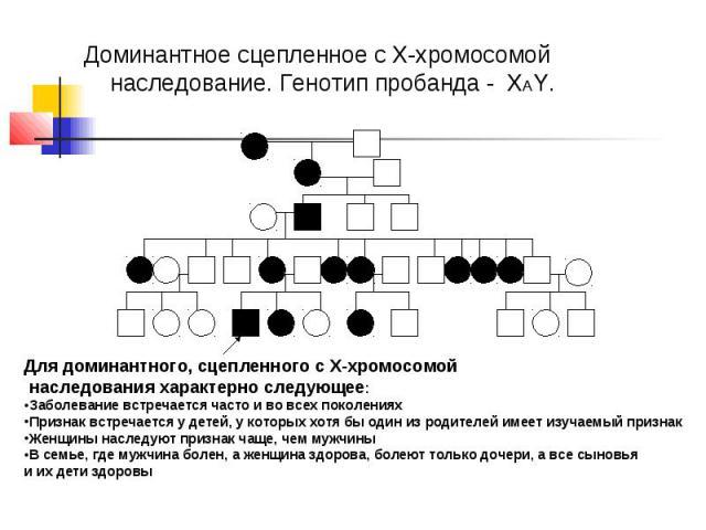 Доминантное сцепленное с Х-хромосомой наследование. Генотип пробанда - ХАY. Для доминантного, сцепленного с Х-хромосомой наследования характерно следующее: Заболевание встречается часто и во всех поколениях Признак встречается у детей, у которых хот…