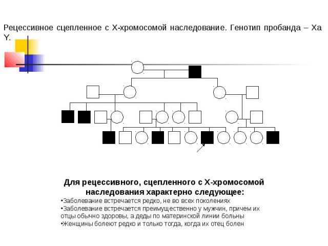 Рецессивное сцепленное с Х-хромосомой наследование. Генотип пробанда – Ха Y. Для рецессивного, сцепленного с Х-хромосомой наследования характерно следующее: Заболевание встречается редко, не во всех поколениях Заболевание встречается преимущественно…
