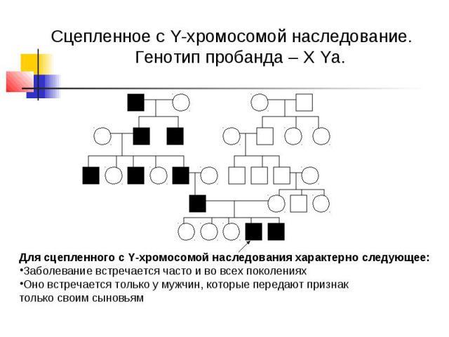 Сцепленное с Y-хромосомой наследование. Генотип пробанда – Х Yа. Для сцепленного с Y-хромосомой наследования характерно следующее: Заболевание встречается часто и во всех поколениях Оно встречается только у мужчин, которые передают признак только св…