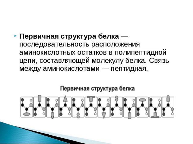 Первичная структура белка — последовательность расположения аминокислотных остатков в полипептидной цепи, составляющей молекулу белка. Связь между аминокислотами — пептидная.