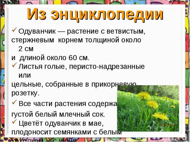Из энциклопедии Одуванчик— растение с ветвистым, стержневым корнем толщиной около 2см и длинойоколо 60см. Листья голые, перисто-надрезанные или цельные, собранные в прикорневую розетку. Все части растения содержат густой белый млечный сок. Цветё…