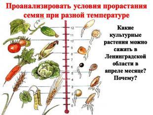 Проанализировать условия прорастания семян при разной температуре Какие культурн