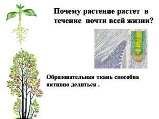 Почему растение растет в течение почти всей жизни? Образовательная ткань способн