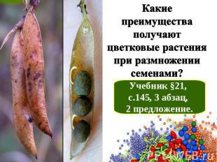 Какие преимущества получают цветковые растения при размножении семенами? Учебник