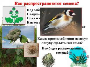 Как распространяются семена? Под забором у края степей Сладко спал одинокий репе