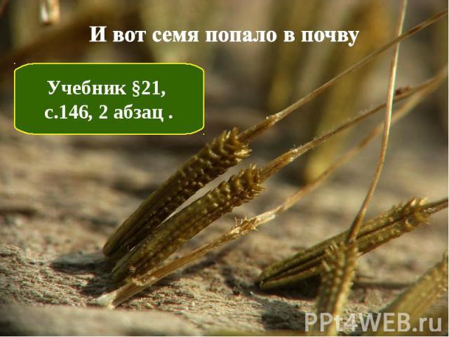 И вот семя попало в почву Учебник §21, с.146, 2 абзац .