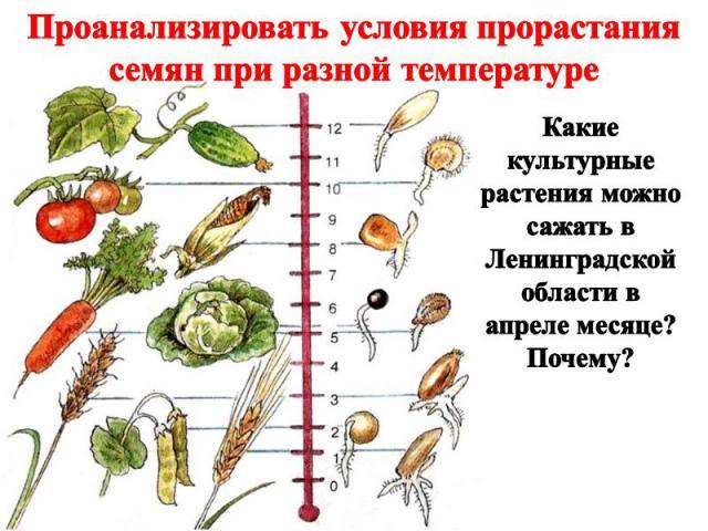 Проанализировать условия прорастания семян при разной температуре Какие культурные растения можно сажать в Ленинградской области в апреле месяце? Почему?