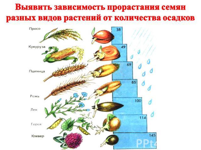 Выявить зависимость прорастания семян разных видов растений от количества осадков