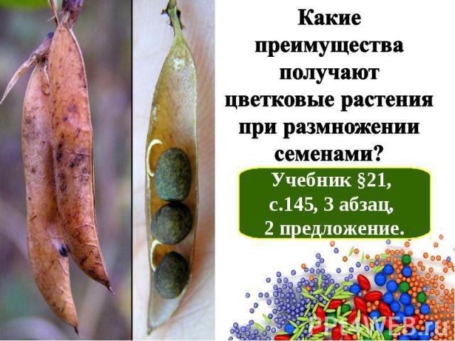 Какие преимущества получают цветковые растения при размножении семенами? Учебник §21, с.145, 3 абзац, 2 предложение.