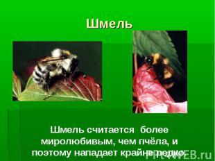 Шмель Шмель считается более миролюбивым, чем пчёла, и поэтому нападает крайне ре