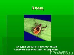Клещи являются переносчиками тяжёлого заболевания- энцефалита.