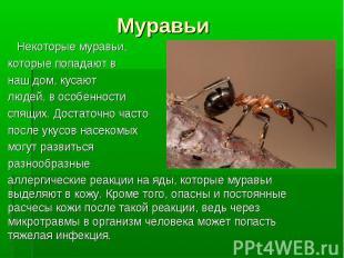 Некоторые муравьи, которые попадают в наш дом, кусают людей, в особенности спящи