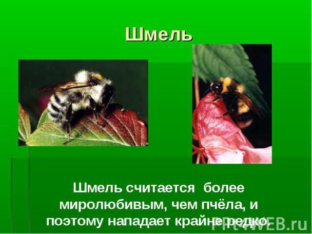 Шмель Шмель считается более миролюбивым, чем пчёла, и поэтому нападает крайне редко.