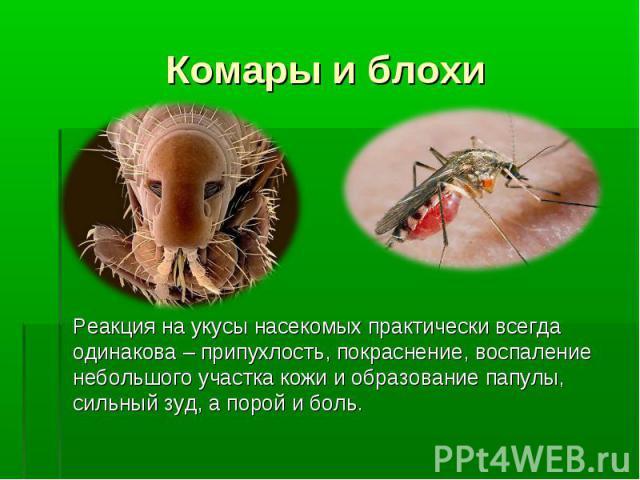 Комары и блохи Реакция на укусы насекомых практически всегда одинакова – припухлость, покраснение, воспаление небольшого участка кожи и образование папулы, сильный зуд, а порой и боль.