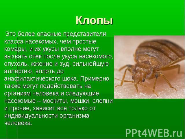Это более опасные представители класса насекомых, чем простые комары, и их укусы вполне могут вызвать отек после укуса насекомого, опухоль, жжение и зуд, сильнейшую аллергию, вплоть до анафилактического шока. Примерно также могут подействовать на ор…