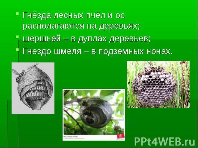 Гнёзда лесных пчёл и ос располагаются на деревьях; шершней – в дуплах деревьев; Гнездо шмеля – в подземных нонах.