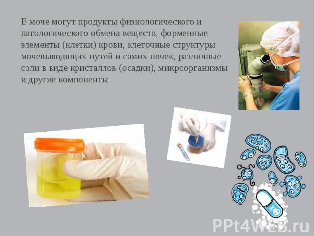В моче могут продукты физиологического и патологического обмена веществ, форменные элементы (клетки) крови, клеточные структуры мочевыводящих путей и самих почек, различные соли в виде кристаллов (осадки), микроорганизмы и другие компоненты