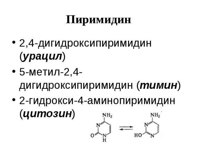 Пиримидин 2,4-дигидроксипиримидин (урацил) 5-метил-2,4-дигидроксипиримидин (тимин) 2-гидрокси-4-аминопиримидин (цитозин)