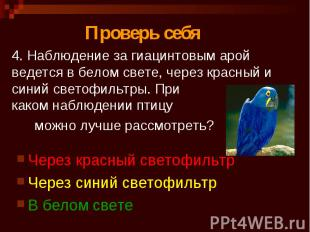 4. Наблюдение за гиацинтовым арой ведется в белом свете, через красный и синий с