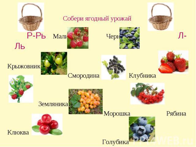 Собери ягодный урожай