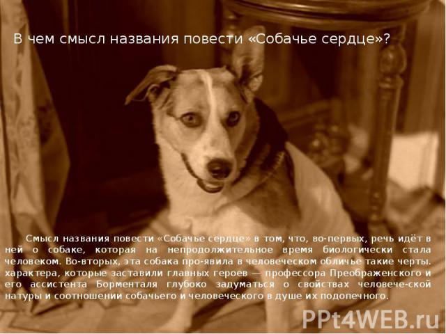 В чем смысл названия повести «Собачье сердце»? Смысл названия повести «Собачье сердце» в том, что, во-первых, речь идёт в ней о собаке, которая на непродолжительное время биологически стала человеком. Во-вторых, эта собака про явила в человеческом о…