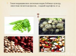 Также выращивались несколько видов бобовых культур, известная гигантская ф
