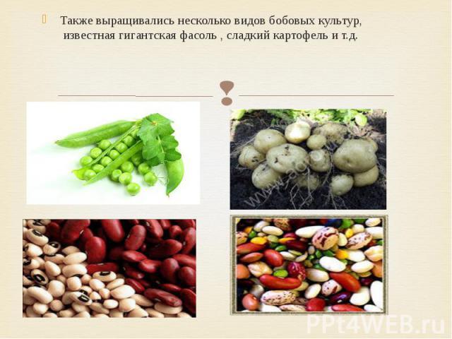Также выращивались несколько видов бобовых культур, известная гигантская фасоль , сладкий картофель и т.д. Также выращивались несколько видов бобовых культур, известная гигантская фасоль , сладкий картофель и т.д.