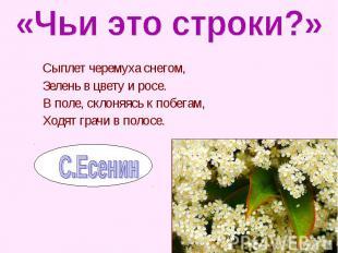 Сыплет черемуха снегом, Сыплет черемуха снегом, Зелень в цвету и росе. В поле, с