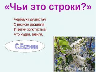 Черемуха душистая Черемуха душистая С весною расцвела И ветки золотистые, Что ку