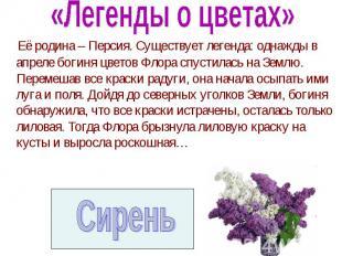 Её родина – Персия. Существует легенда: однажды в апреле богиня цветов Флора спу