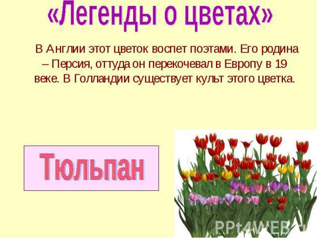 В Англии этот цветок воспет поэтами. Его родина – Персия, оттуда он перекочевал в Европу в 19 веке. В Голландии существует культ этого цветка. В Англии этот цветок воспет поэтами. Его родина – Персия, оттуда он перекочевал в Европу в 19 веке. В Голл…