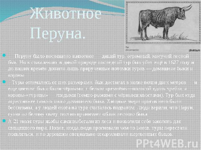 Животное Перуна. Перуну было посвящено животное — дикий тур, огромный, могучий лесной бык. Но к сожалению, в дикой природе последний тур был убит ещё в 1627 году и до наших времён дожили лишь прирученные потомки туров — домашние быки и коровы. Туры …