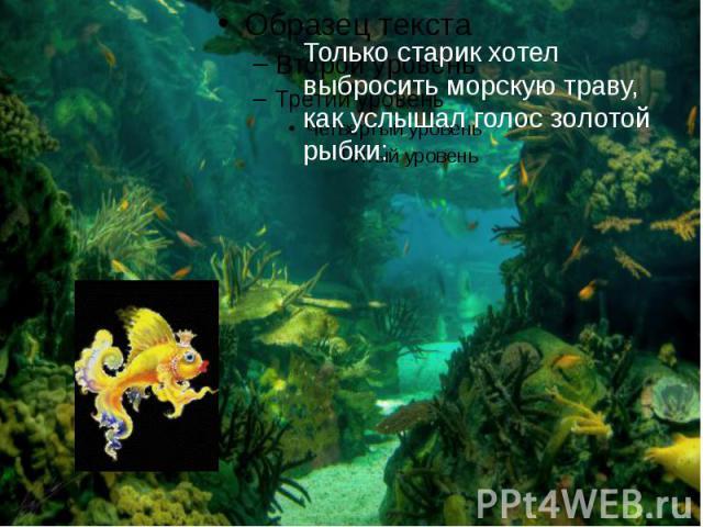 Только старик хотел выбросить морскую траву, как услышал голос золотой рыбки: