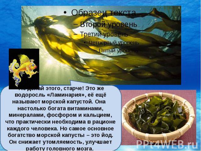 -Не делай этого, старче! Это же водоросль «Ламинария», её ещё называют морской капустой. Она настолько богата витаминами, минералами, фосфором и кальцием, что практически необходима в рационе каждого человека. Но самое основное богатство морской кап…