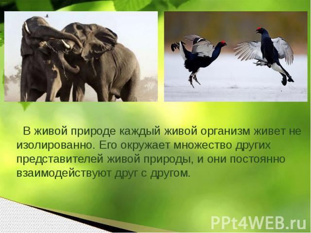 В живой природе каждый живой организм живет не изолированно. Его окружает множество других представителей живой природы, и они постоянно взаимодействуют друг с другом.